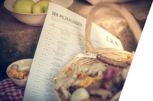 mmw_Pilzkalender